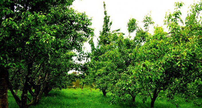 CoralTree Organics orchard apple trees