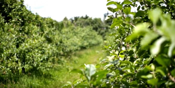 CoralTree organic summer orchard