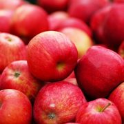 Beautiful red tree-ripened apples ready for processing into CoralTree Organic Apple Cider Vinegar